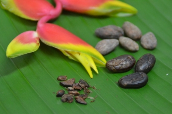 heliconia flower with cacao beans, shelled beans, and nibs